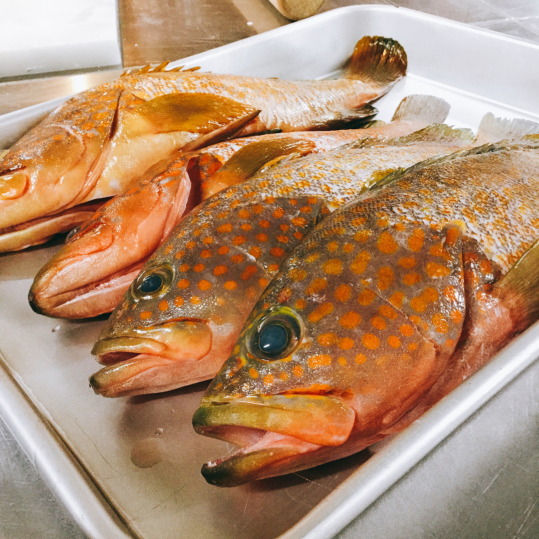 築地直送便届きました イチオシは福岡産のキジハタ 夏が旬のとっても美味しい魚です アクアパッツァでお出しします その他、ホウボウ、イサキ、マゴチもあります️ お盆中もランチ、ディナー営業してます️ご来店お待ちしております🏻