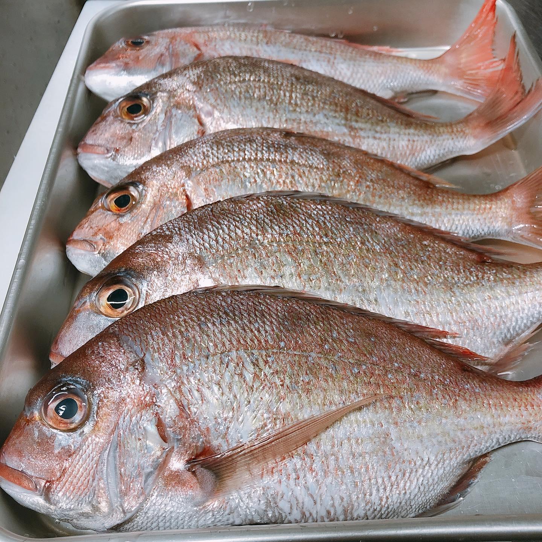 アクアパッツァ用の天然真鯛入荷です️ 魚を丸ごと煮込んだ料理のアクアパッツァ当店オススメ料理のひとつです 是非お試しください️
