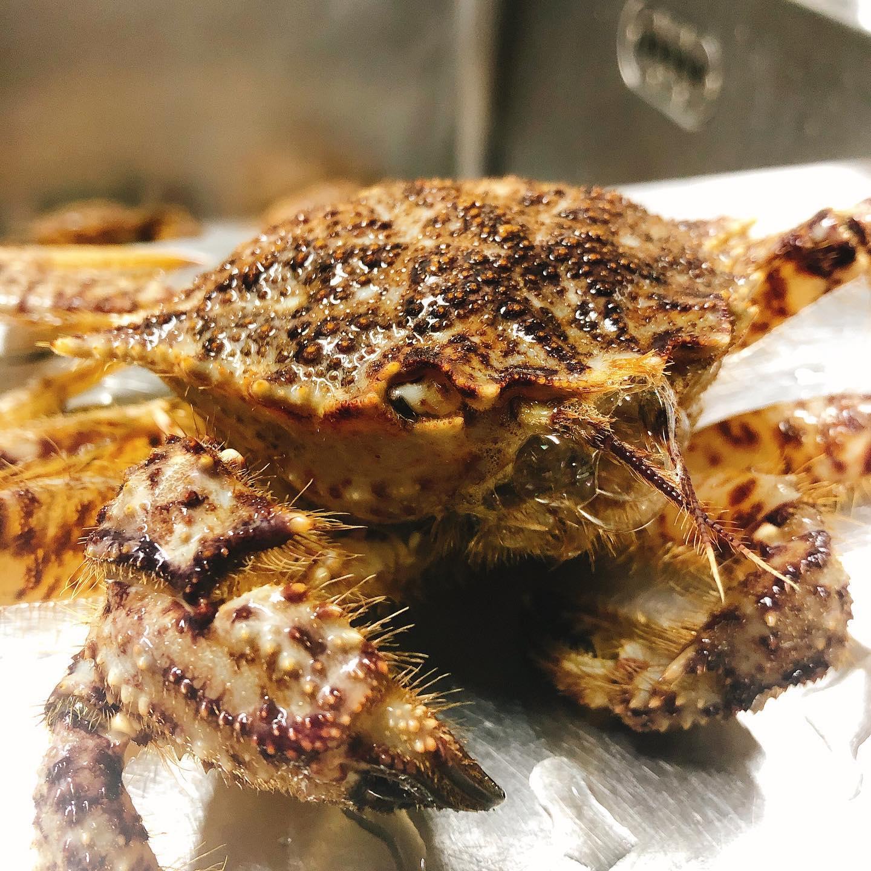 クリガニ少しだけ入荷しました️🦀 小さな毛蟹のような旨味のしっかりした美味しい蟹です 一度茹でて味噌と身を取り出し、殻で出汁を取ってパスタのソースにしました 2月も残りわずか。 よろしくお願い致します🏻