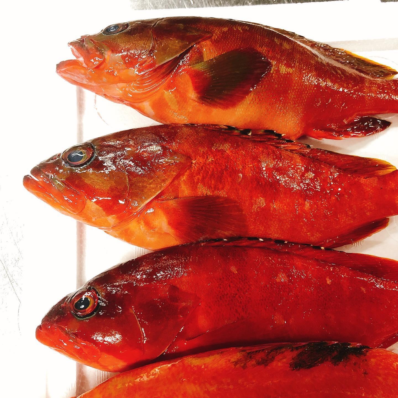 豊洲より新鮮なお魚が到着しました アカハタにアカイサキ、ミノカサゴ、手長ダコ️ 中々マニアックなラインナップです やっぱり定番は丸ごとアクアパッツァ! 間違いなく美味しいです タコはぶつ切りにしてフリットかなーと考えてます🤔 週末もよろしくお願い致します  #豊洲便  #美味しいお魚あります  #アカハタ  #アカイサキ  #ミノカサゴ  #肉の盛り合わせ  #群馬  #イタリア料理